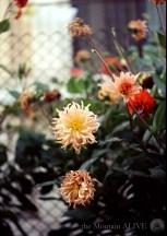 Цветя на село