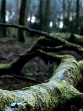 Glyn Wood near Tintern
