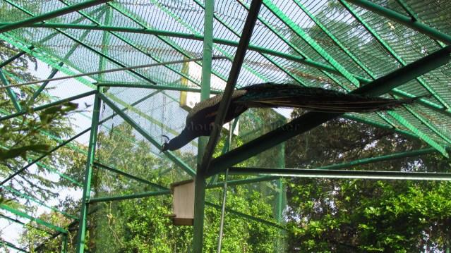 Himalayan Bird Park 03