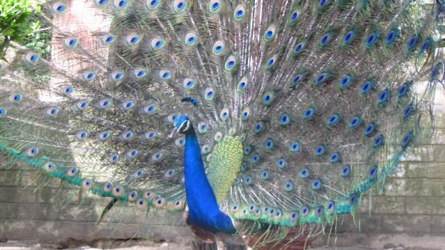 Himalayan Bird Park 12