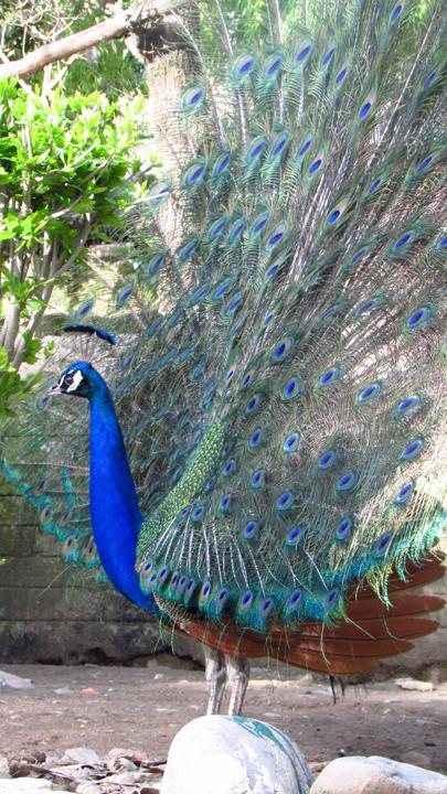 Himalayan Bird Park 13