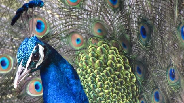 Himalayan Bird Park 16