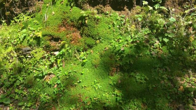 Himalayan Flora Series 4 - 03