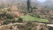 A beautiful walk with fields along the way to Geeli Mitti; Photo: Abhinav Kaushal