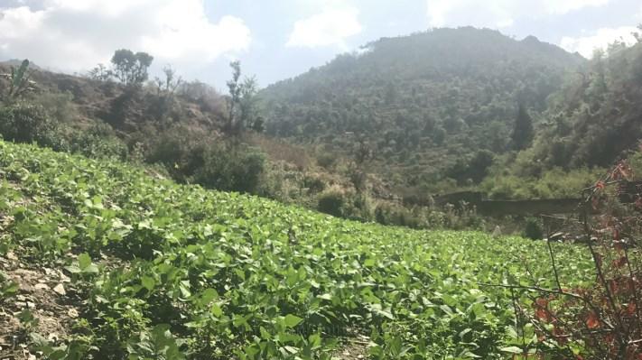 A potato field mid way to Geeli Mitti; Photo: Abhinav Kaushal