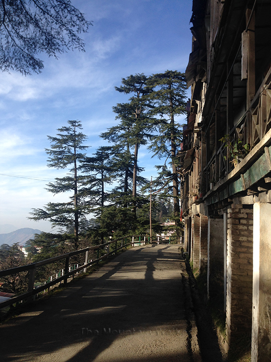 Shimla Walking 09