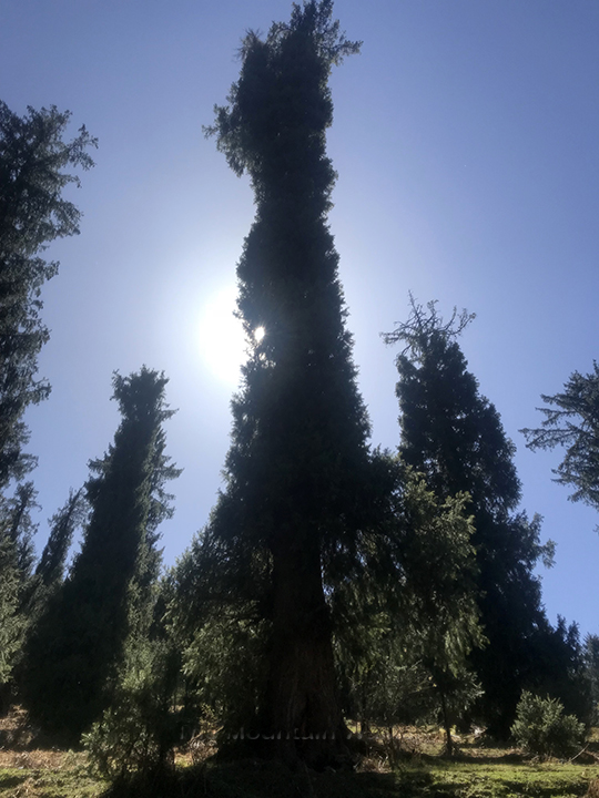 WM Chandrakhani Forests 01