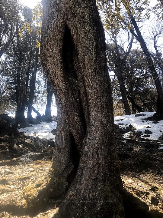 WM Chandrakhani Forests 08