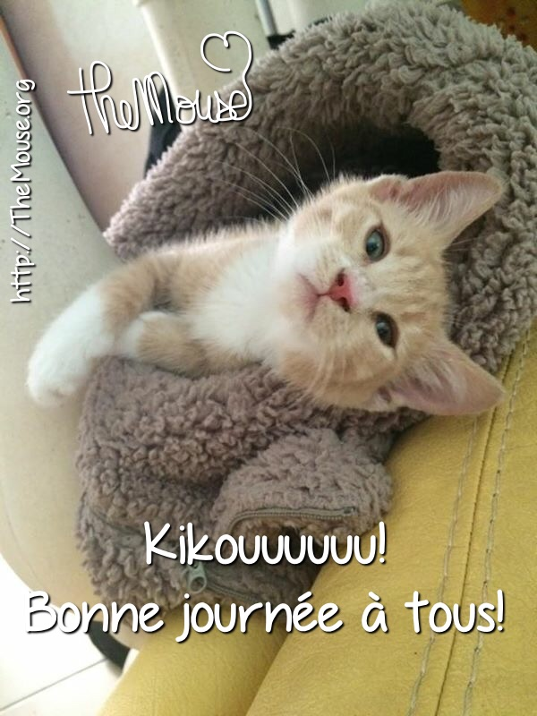 Topic des chats - Page 32 Image-1