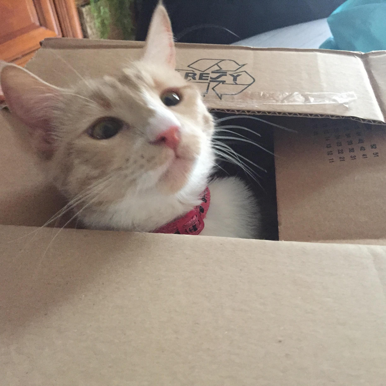 Vie de chat: Prada et sa passion pour les cartons!