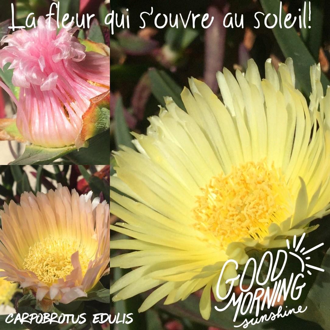 Plaisir Des Yeux La Fleur Qui Aime Le Soleil Mag Des Quinquas Re