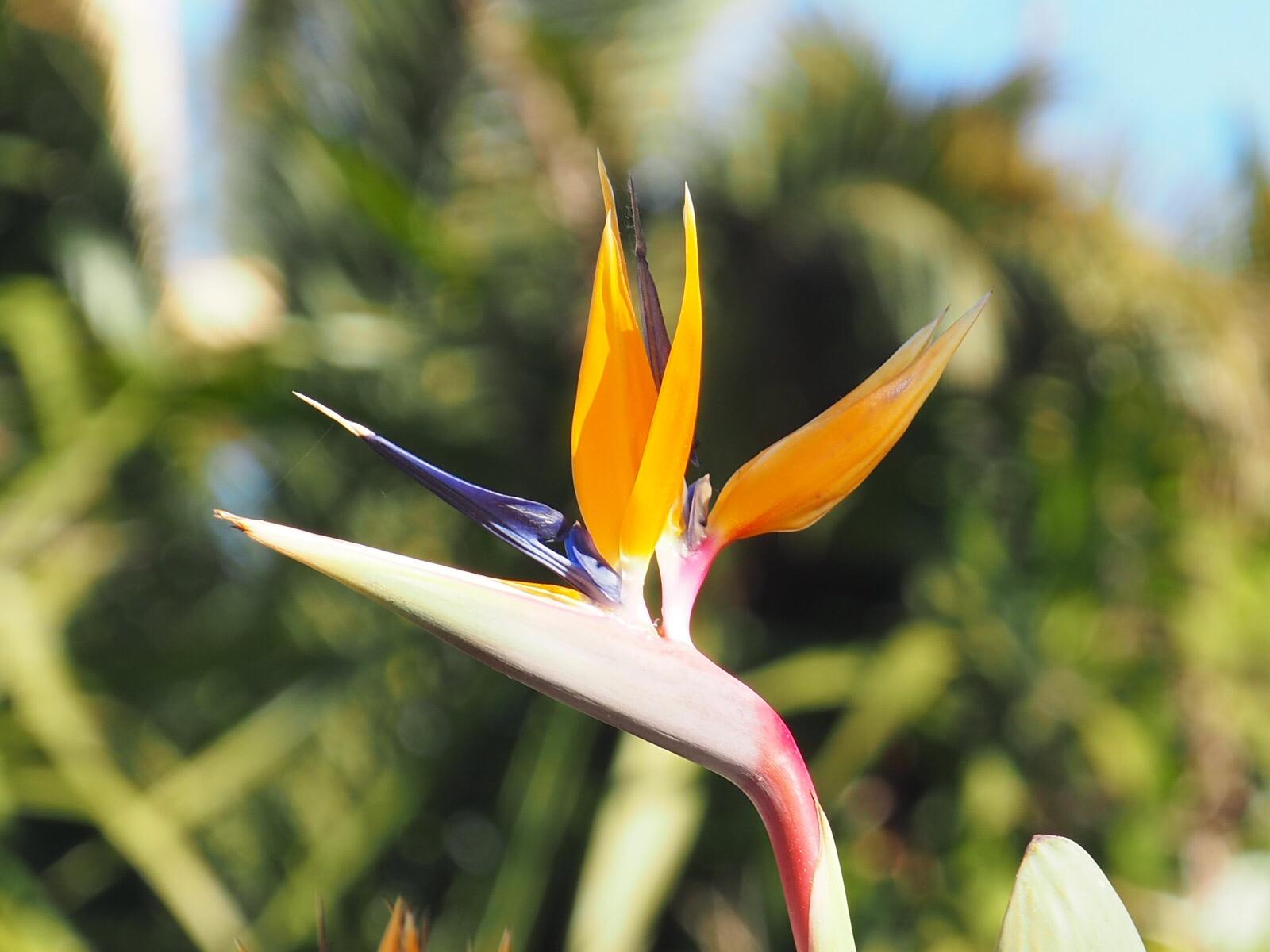Plaisir des yeux: quelques fleurs de saison…