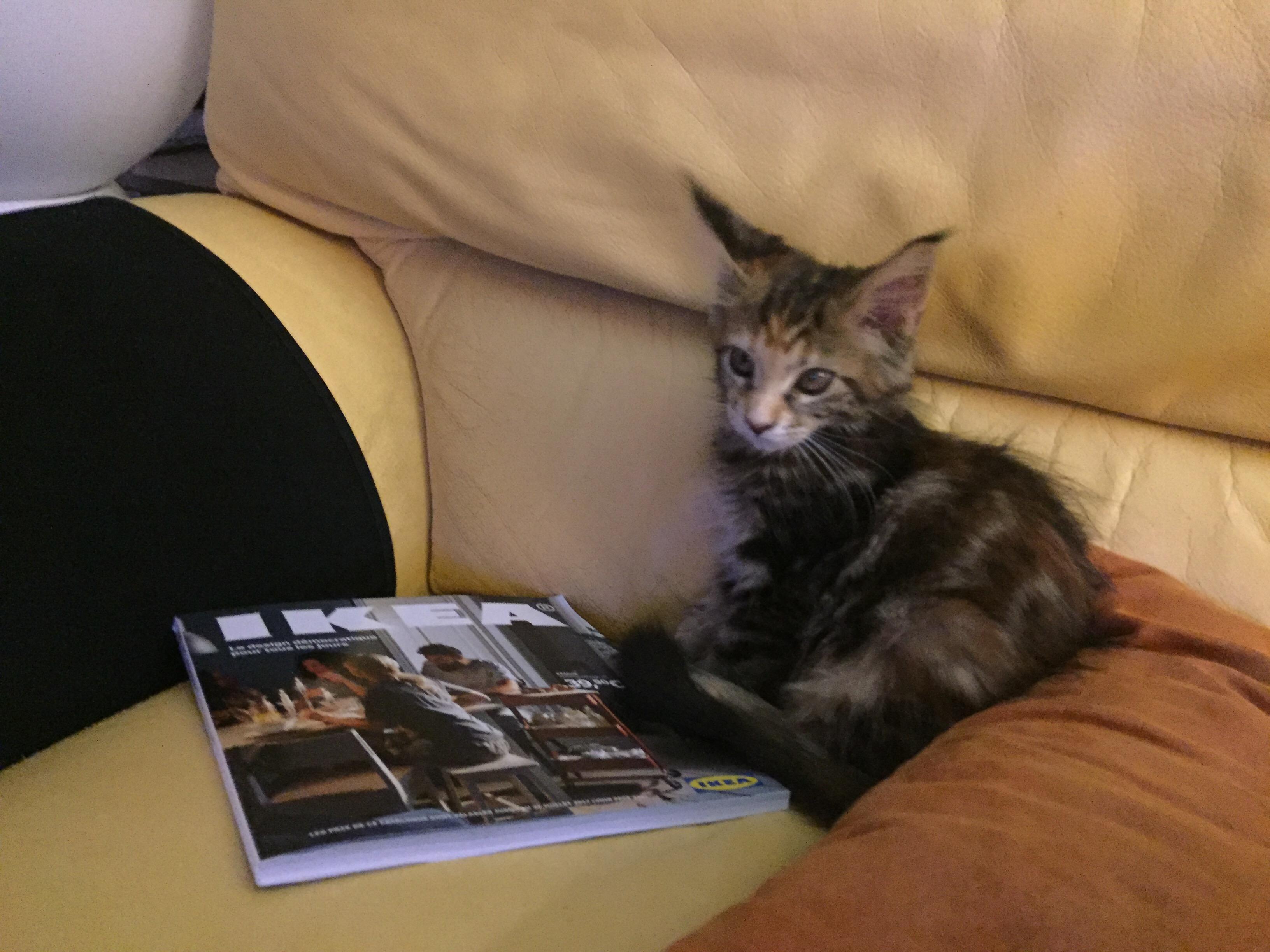 Vie de chat: Mamour n'a pas fini de s'installer!