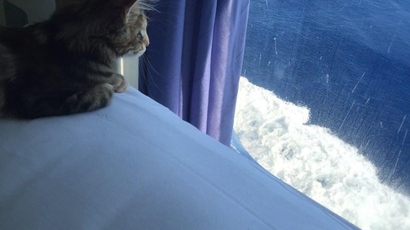 Vie de chat: quand Mamour va en Corse en bateau!