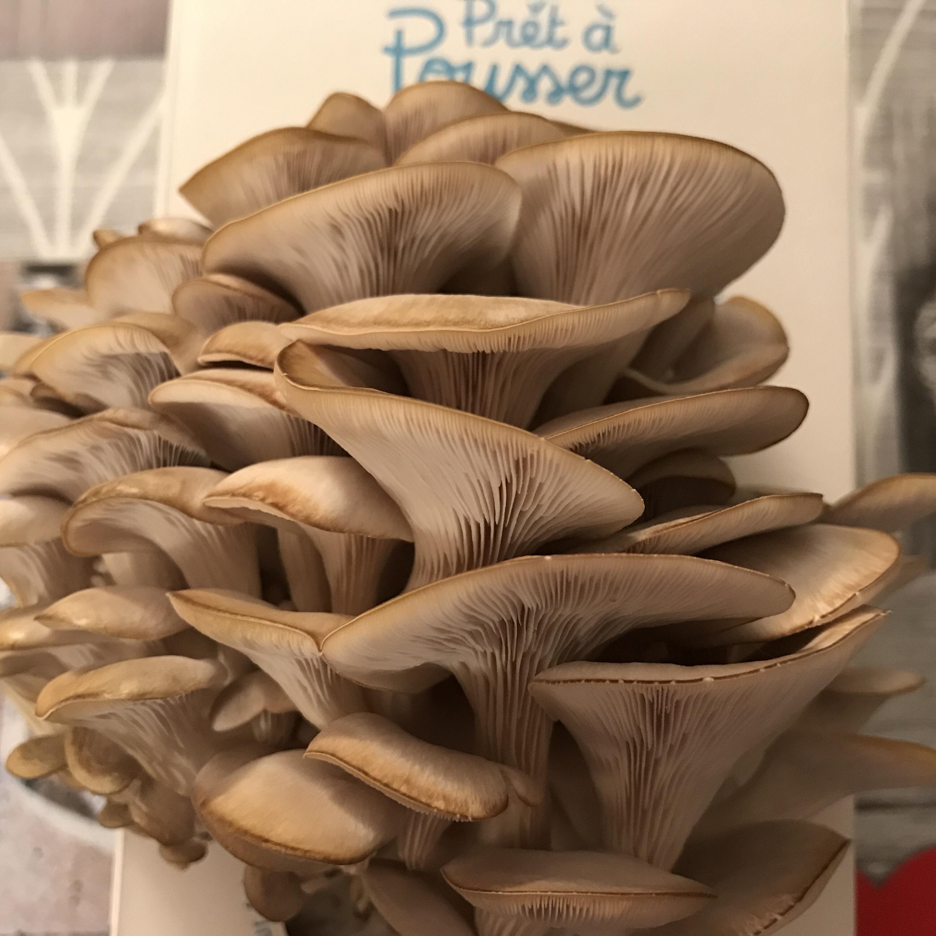 Des champignons à la maison avec Prêt à pousser