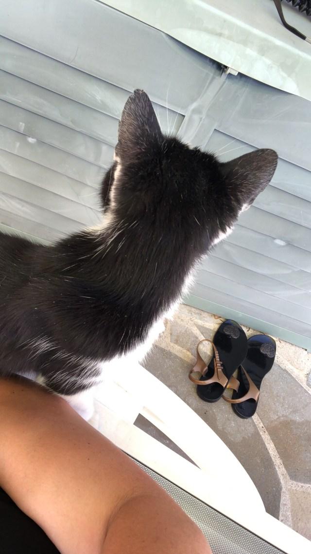 Lundi soleil, sunny monday, chat, car, Flip, Félix, chien