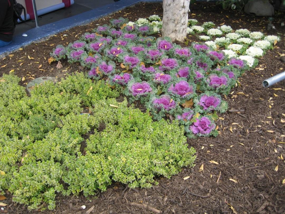 Edible Plants Tomorowland