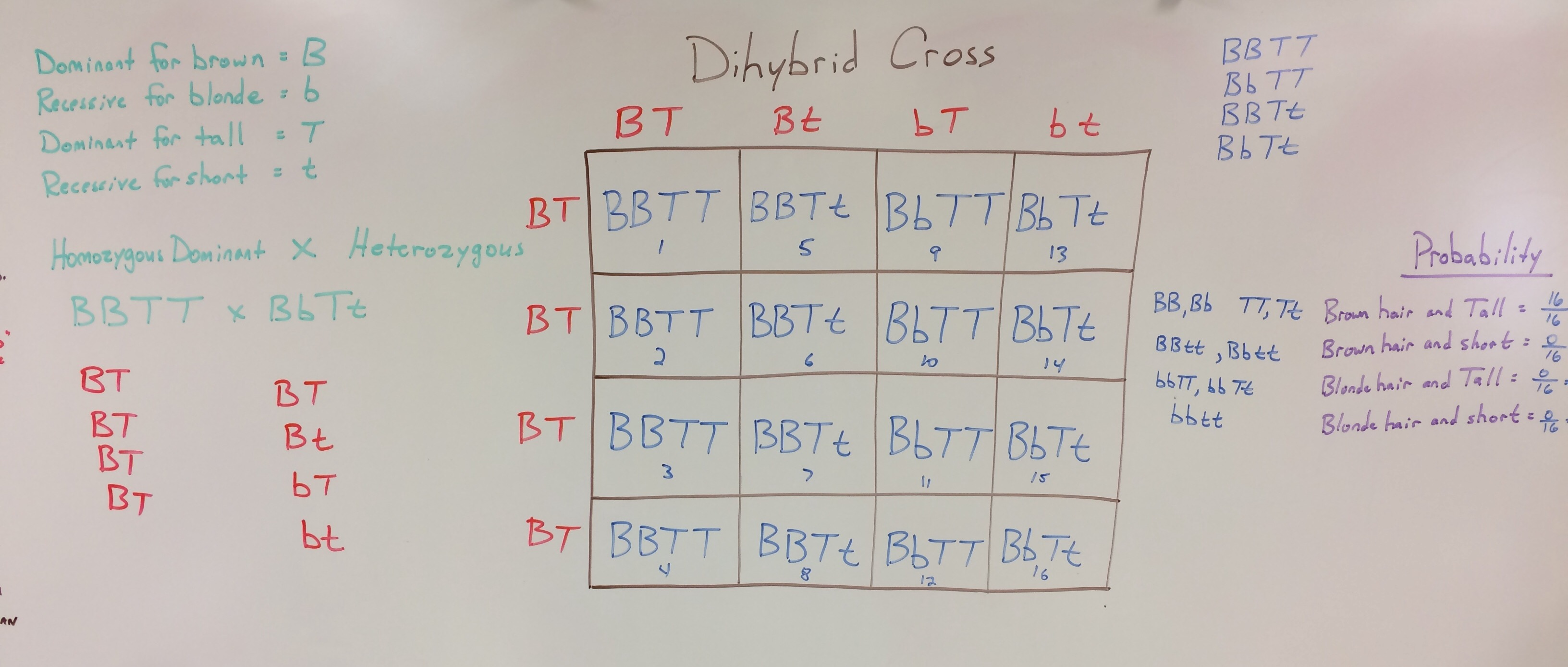 Worksheet Dihybrid Crosses Unit 3 Genetics
