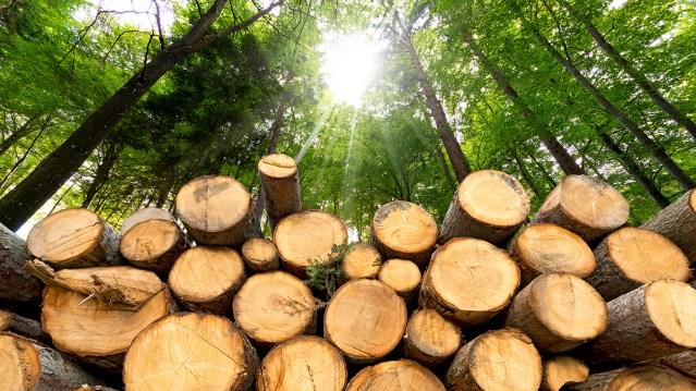 The price of lumber is rebounding