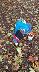 Autumn Conker picking