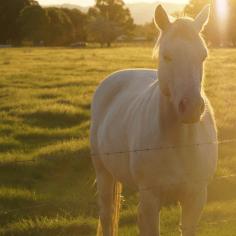 horse at farmstay