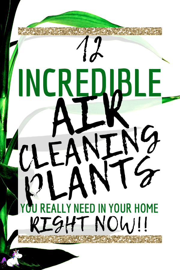 12 Air Cleaning Plants You Need In Your Home   Interior design   Air purifying plants   Indoor plants   Houseplants that clean air   low light houseplants   houseplants pets   non-toxic plants   Via: https://themummyfront.com #themummyfront.com #houseplants #healthtips #healthyliving #houseplantspets #houseplantsdecor