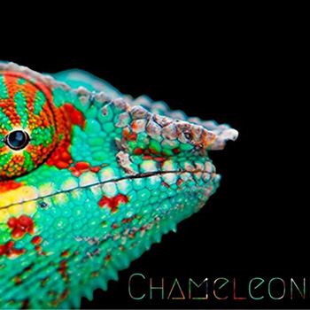 Chameleon by Seven Spies