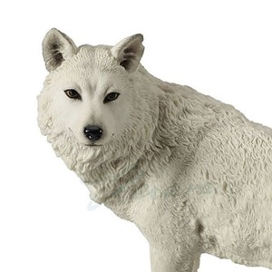 White wolf looking back close up