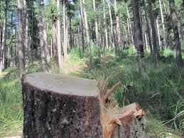 Police arrest timber smugglers in Sopore