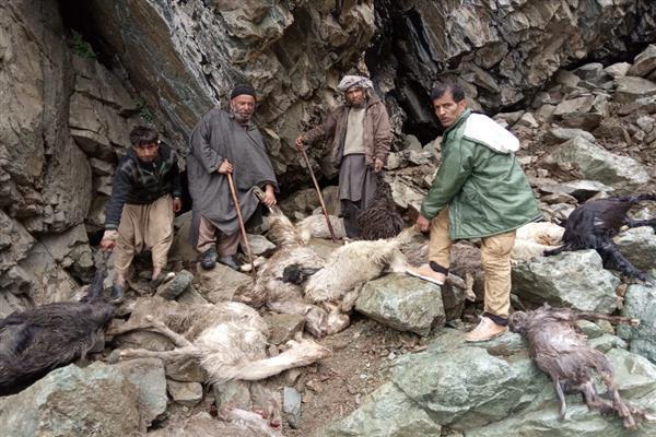 Cloudburst kill 100 livestock in Tral