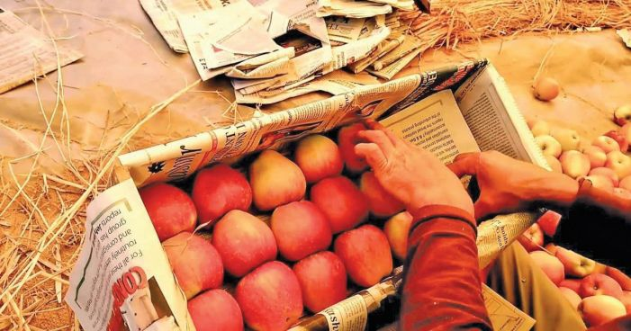 Newspapers shunned for fear of corona, now hard to find for packing apples