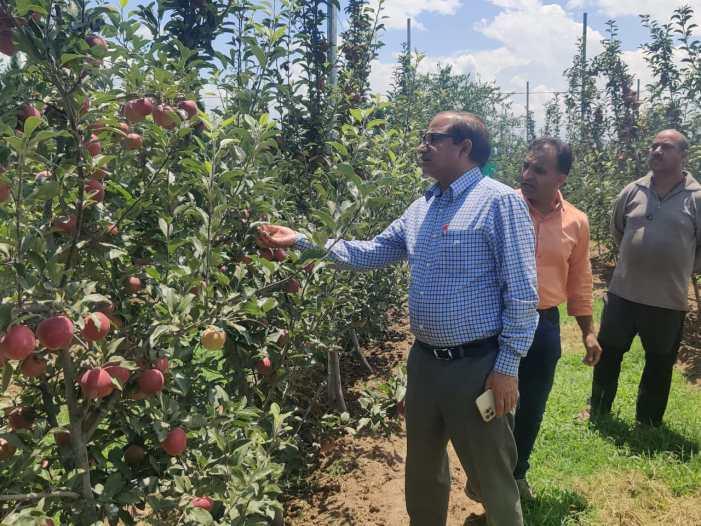 DG Horticulture Kashmir visits Tangmarg, B'la