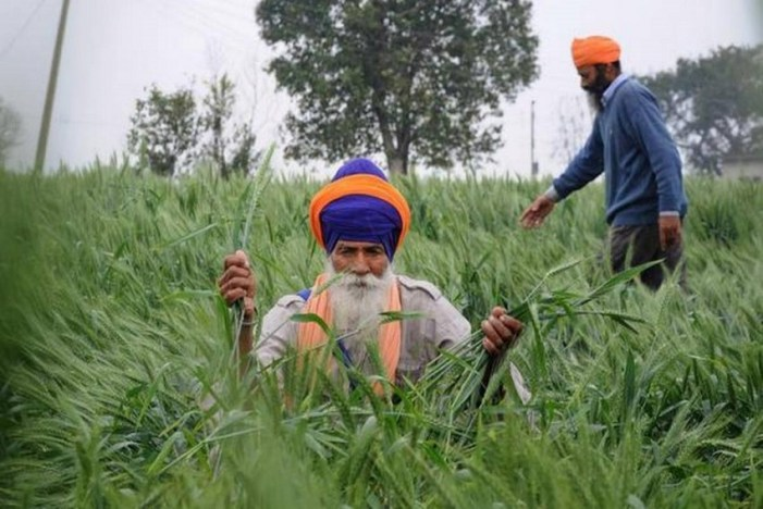 Punjab CM Urges PM To Allow Paddy Procurement From Today