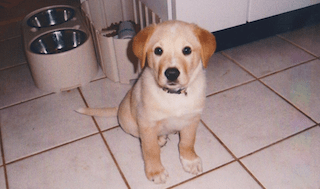 puppy kitten tile needs to be clean with steam mop