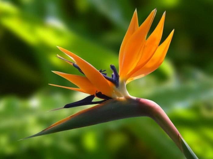 flor ave do paraíso
