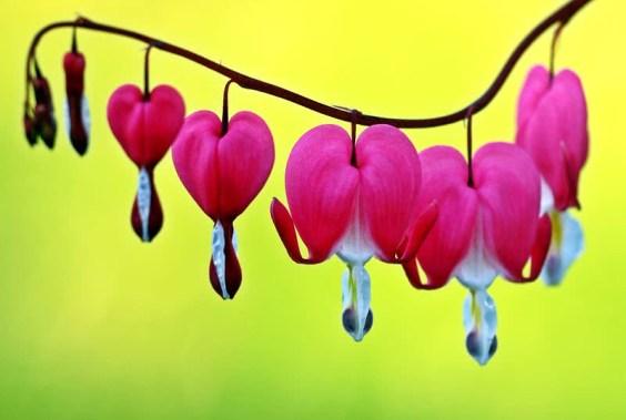 mais lindas flores