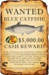 bluecat#3