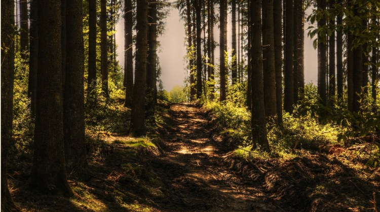 A hiking trail - Mendocino National Forest offers several fantastic ones.