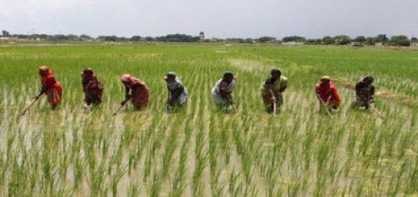 Ebonyi bans consumption of foreign rice