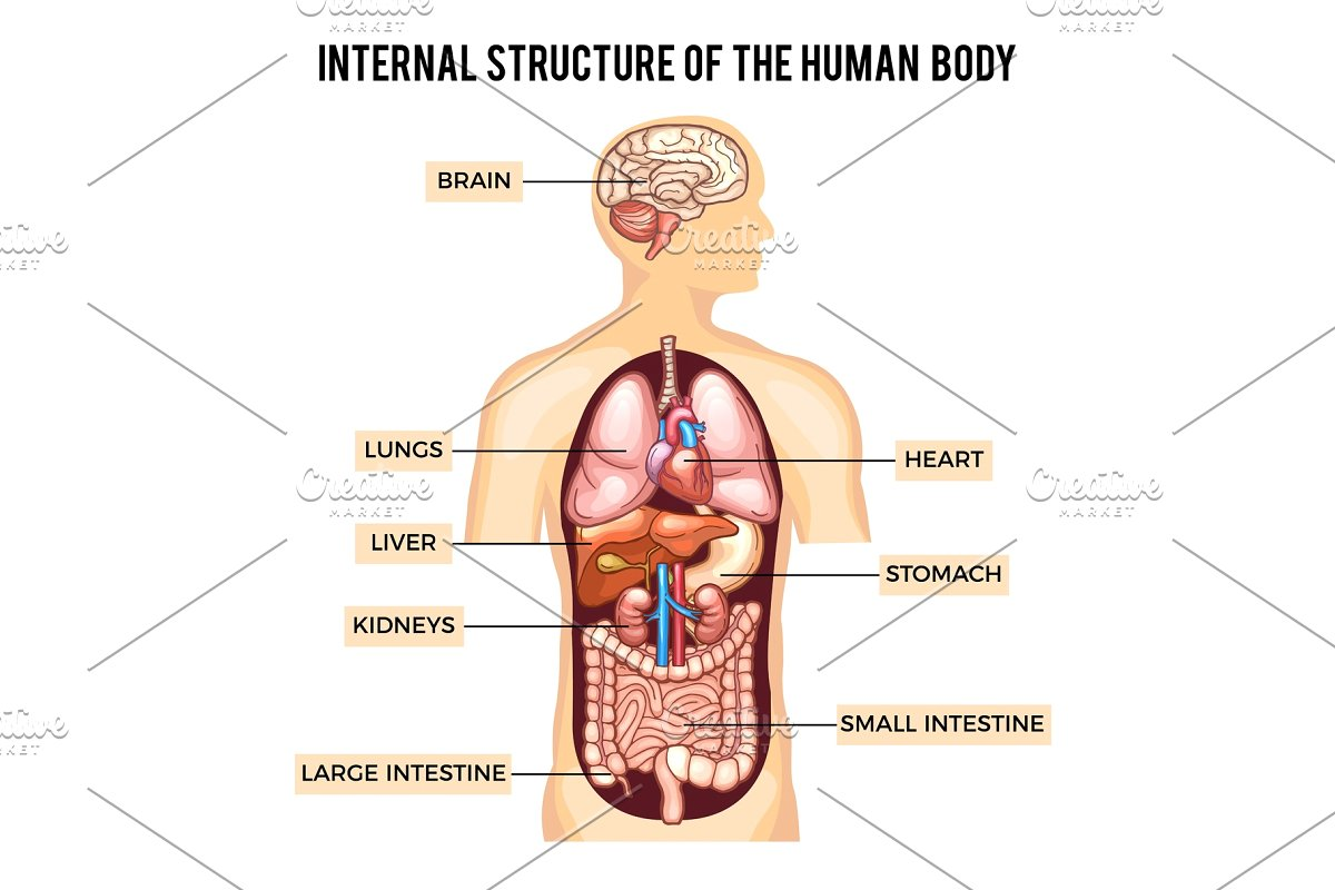 Five Basic Facts You Should Know About Human Body
