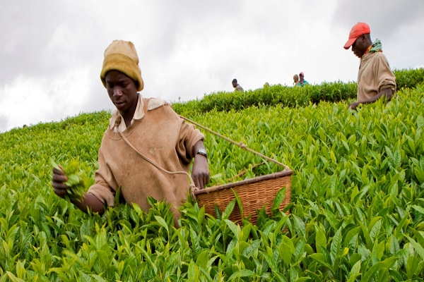 Strategy for post-COVID-19 agriculture financing in Nigeria