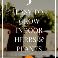 5 Easy To Grow Indoor Herbs & Plants