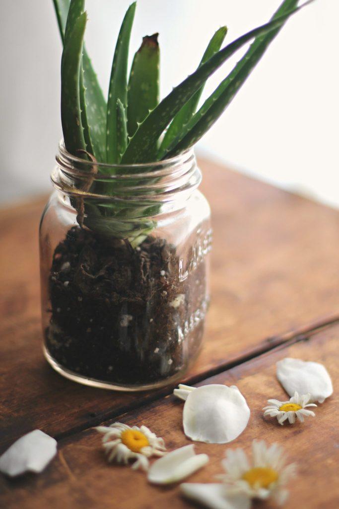 DIY Aloe Vera Face Mist