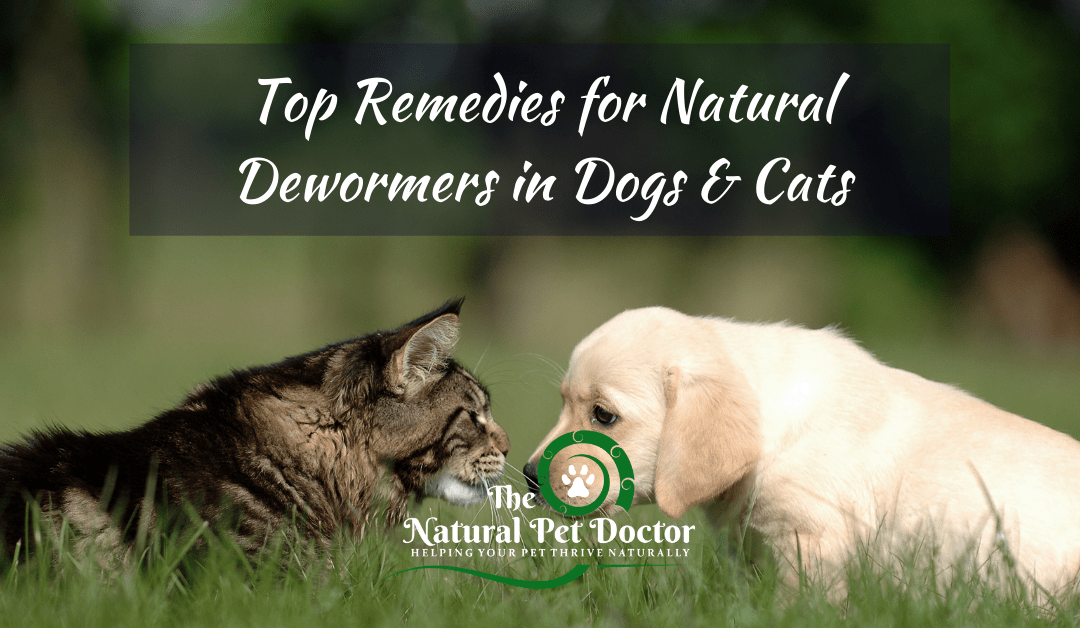 Top Remedies for Natural Dewormers in Dogs & Cats