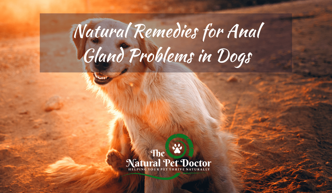 Natural Remedies for Anal Gland Problems in Dogs