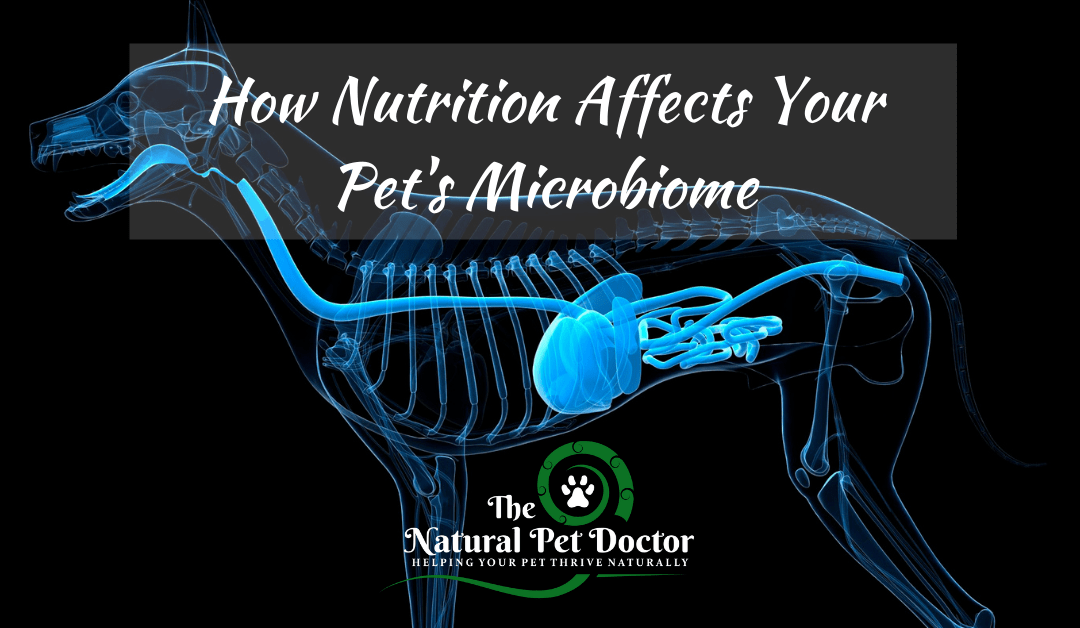 How Nutrition Affects Your Pet's Microbiome