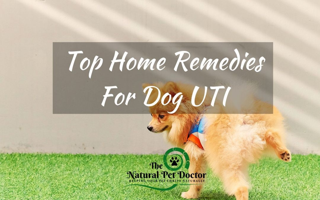 Top Home Remedies For Dog UTI
