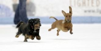 Dog_ice2