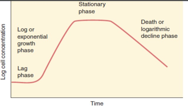 Phases of growth curve