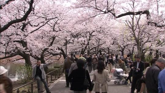 #TRIPTOJAPAN: TAPPA N°2 TOKYO – 1° Esperienza